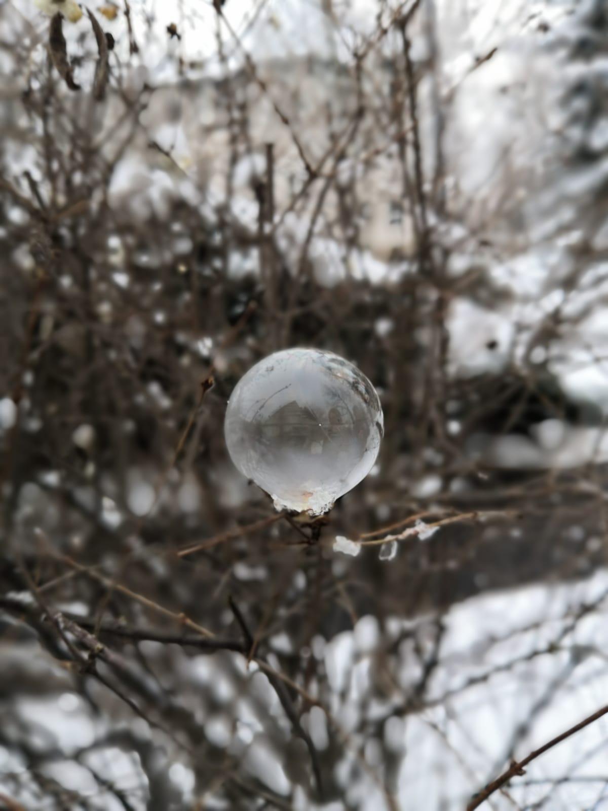Frostige Schönheiten
